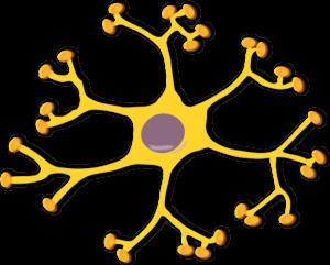 18 neuron