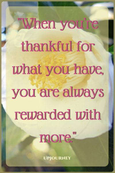 When you're thankful for what you have, you are always rewarded with more. #quotes #thankyou #gratitude #thanks #inspirational