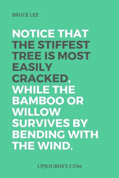 Notice that the stiffest tree is most easily cracked, while the bamboo or willow survives by bending with the wind - Bruce Lee. #quotes #survival