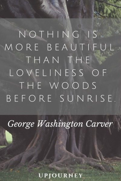 Nothing is more beautiful than the loveliness of the woods before sunrise - George Washington Carver. #quotes #nature #woods #sunrise