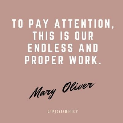 To pay attention, this is our endless and proper work - Mary Oliver. #quotes #work #attention #endless #proper #work