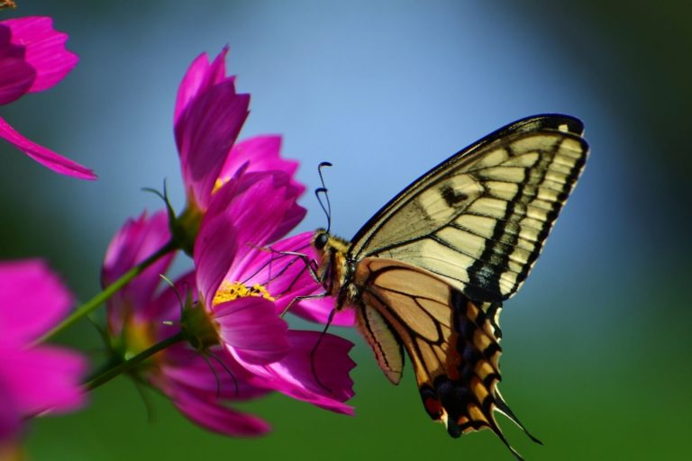 35 Most Beautiful and Inspirational Butterfly Quotes and Sayings