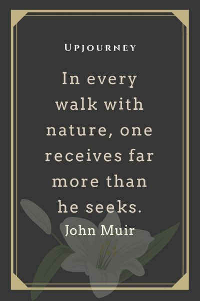 In every walk with nature, one receives far more than he seeks - John Muir. #john #muir #quotes #walk #nature