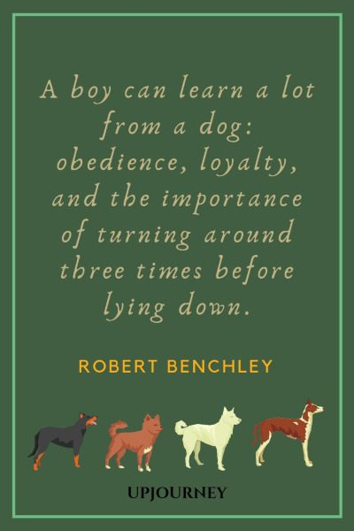 A boy can learn a lot from a dog: obedience, loyalty, and the importance of turning around three times before lying down. — Robert Benchley #loyalty #quotes #boy #dog