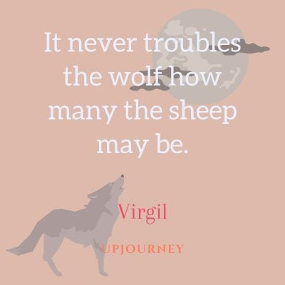 """It never troubles the wolf how many the sheep may be."" — Virgil #wolf #quotes"
