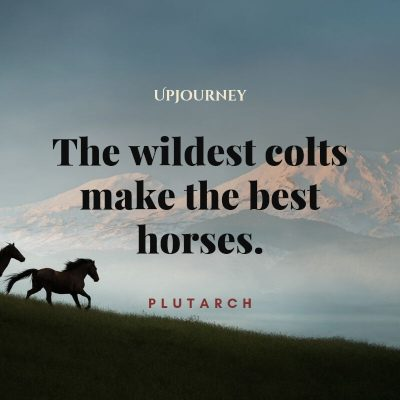"""""""The wildest colts make the best horses."""" — Plutarch #horse #quotes #colt"""