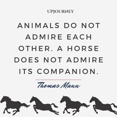 """""""Animals do not admire each other. A horse does not admire its companion."""" — Thomas Mann #horse #quotes #animal #companion"""